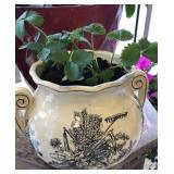 Large vase with live strawberry plants