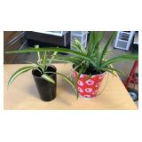 Mixed Oxygenating spider plants read for more info