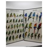 2 Posters: 1 different parrots, other different Ma