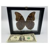 Butterfly shadow box                (700)