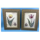 Two lovely prints of 18th century Botanical drawin