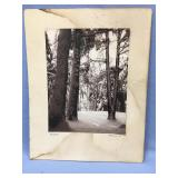 Old photograph of a forest scene, in good conditio