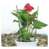Yardwe 3pc Plant Support Trellis Holders