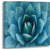 Canvas Art-Blue Succulent-Mounted