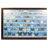 20TH C. FRAMED TAIWANESE BUTTERFLY SPECIMENS