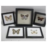 """Five Framed Butterfly Specimens Largest 6.5""""x 6.5"""""""