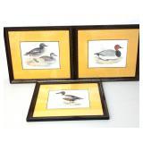 Vintage Signed Set of 3 Mallard Duck Watercolor Fr