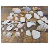 Sea Shells From Nevarre Florida