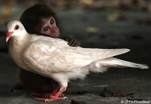monkey-and-pigeon.jpg.644x0_q70_crop-smart