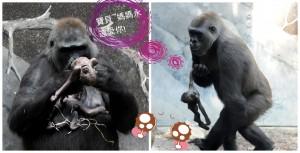 PAY-gorilla (1)_副本