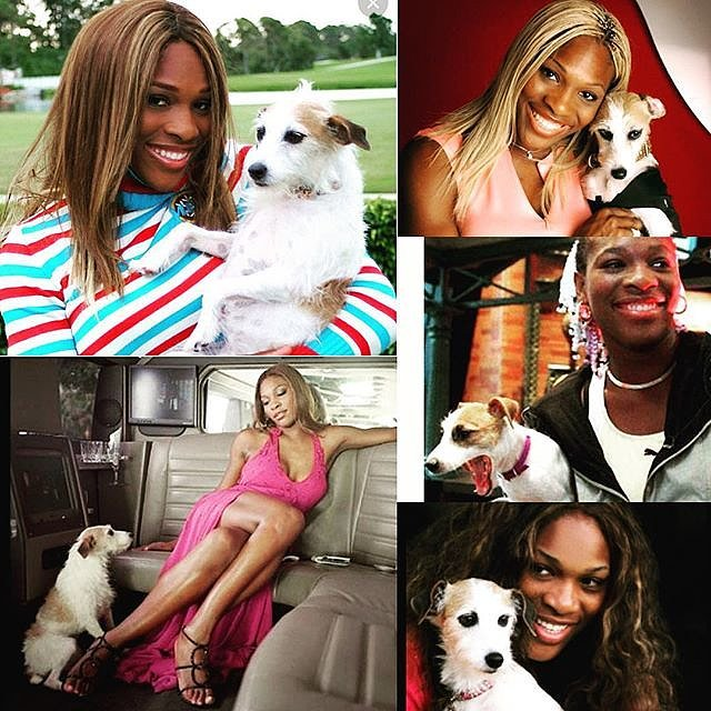 Serena-Williams-Dog-Jackie-Dies