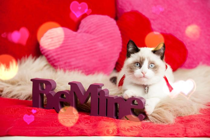 202-valentines_day_cat_meitu_1
