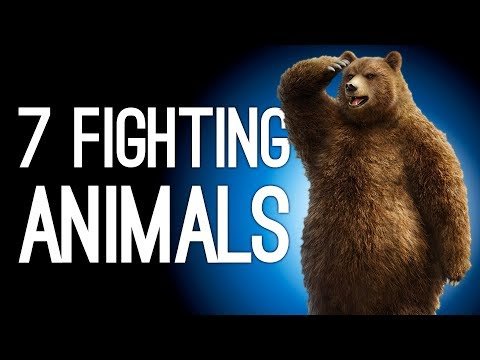 7 Animals Who Snuck Into Human Fighting Tournaments