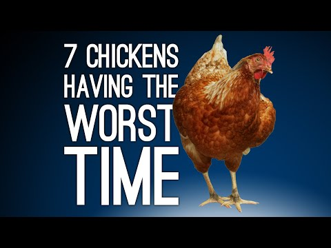 7 Chickens Having the Worst/Last Day of Their Chicken Lives