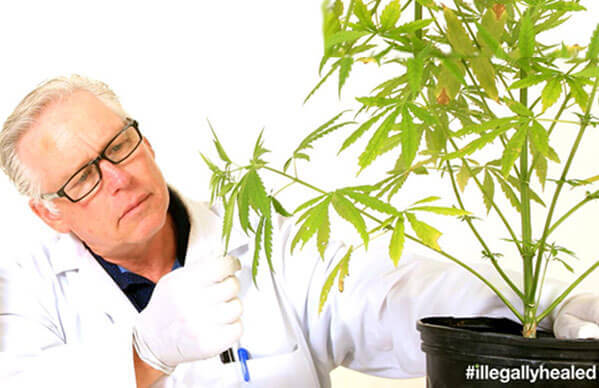 scientist checking out cannabis plant