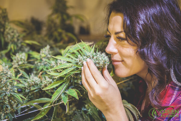 woman smelling a cannabis plant