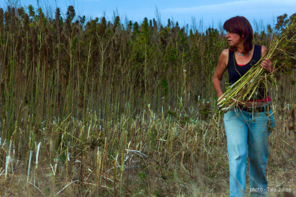woman next to a hemp field
