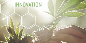 7 New Innovations in Cannabis & Hemp