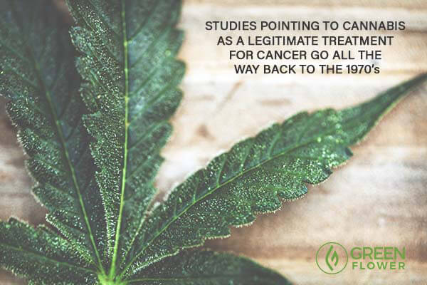 cannabis leaf with trichomes