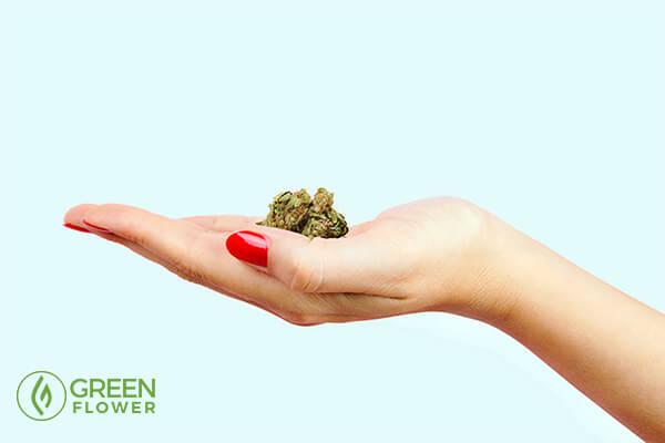 woman's hand holding cannabis bud