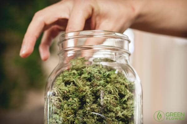 picking cannabis from a jar