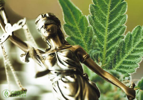Lady Justice and cannabis leaf