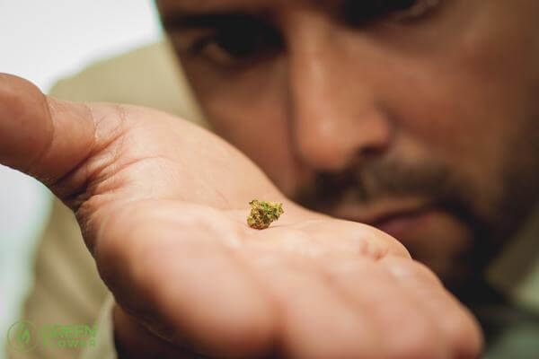 Chris holding a small piece of cannabis