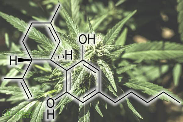 cannabis chemical compound