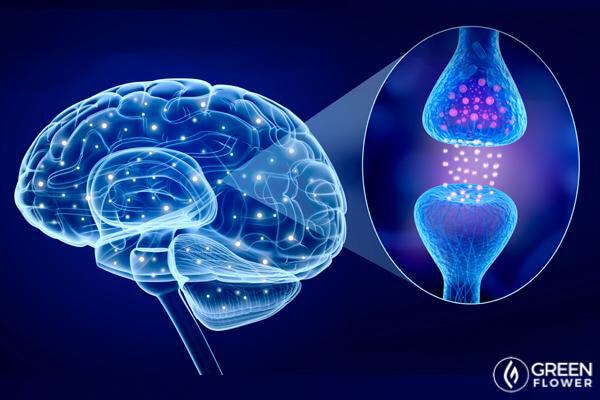 endocannabinoid system graphic