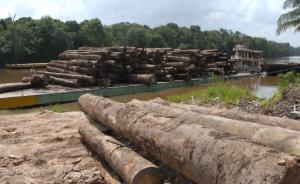 noticias internacionales latinoamérica es peligroso para activistas ambientales