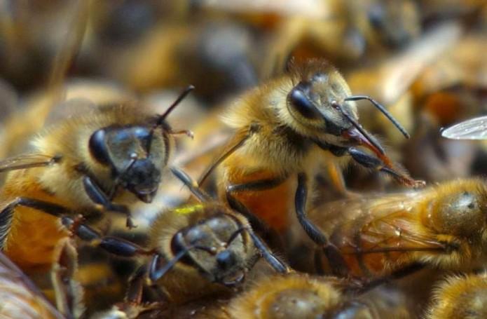 noticias monterrey muere hombre por ataque de abejas