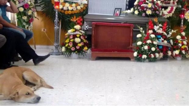 Perro va a funeral de su dueña- Gregorio Martínez.