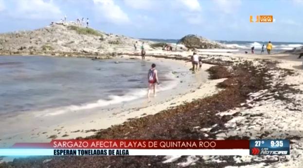 Toneladas y toneladas de sargazo cubren las playas de Quintana Roo