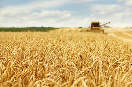 Harvest Bluff by Hayden Homes