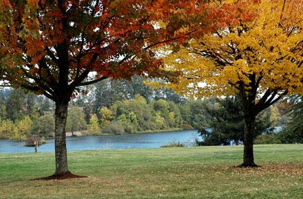 Pinehurst by Hayden Homes