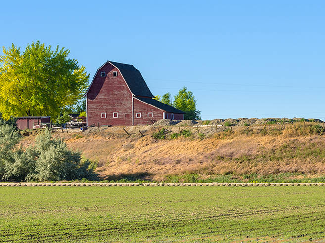 Farm with crops and a red barn
