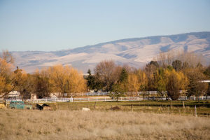 New-Homes-in-Walla-Walla