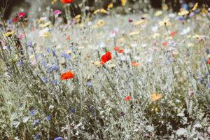 Plant Wild Flowers Landscape-Idea
