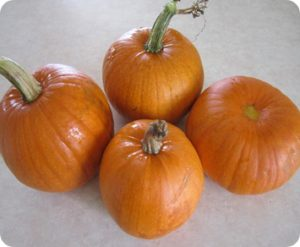 Our Homegrown Pumpkins