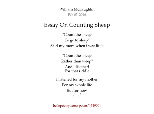 essay on counting sheep by william mclaughlin hello poetry