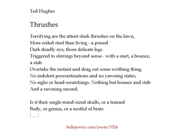 Thrushes by Ted Hughes - Hello Poetry