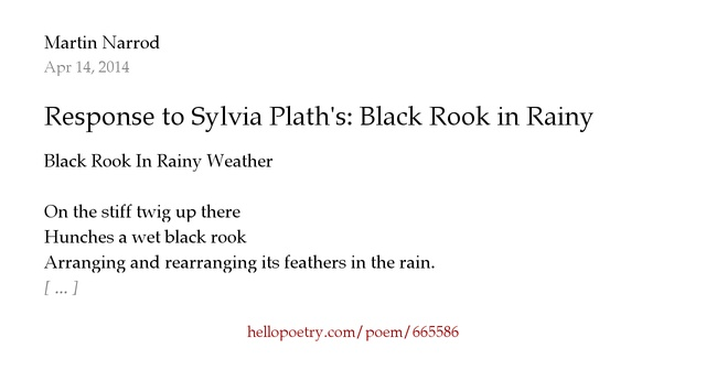 black rook in rainy weather a Black rook in rainy weather december 1, 2016 on the stiff twig up there  hunches a wet black rook arranging and rearranging its feathers in.
