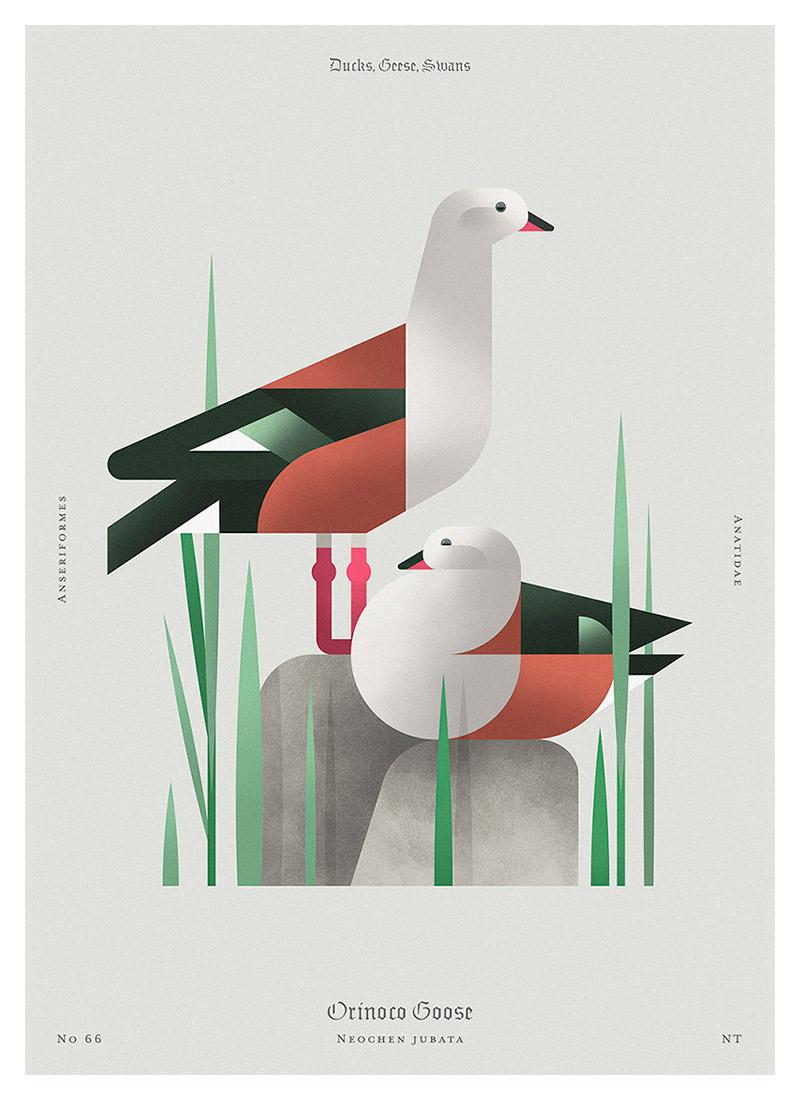 Beauty of birds - Illustrations by Aga Więckowska