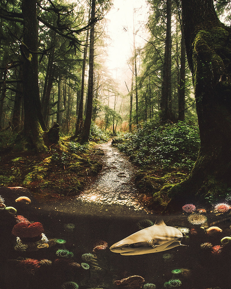 Digital Art & Photography by Justin Peters