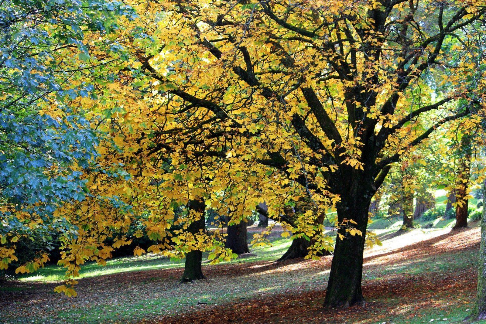 autumn-707614_1920