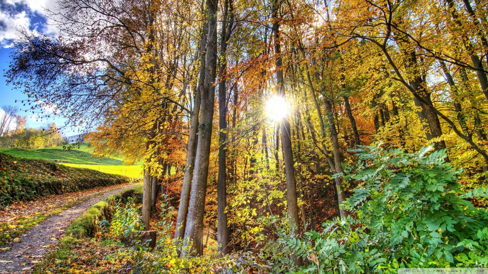 sunlighted_forest_hdr-wallpaper-1920x1080