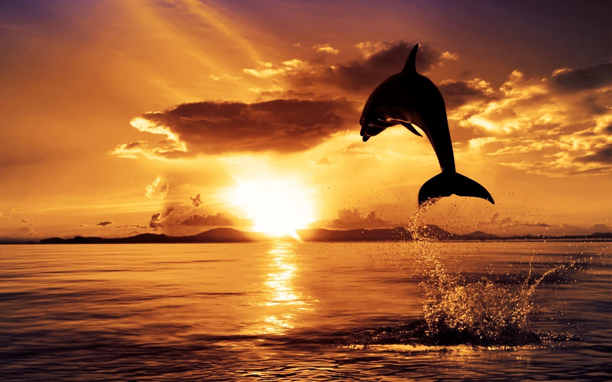 skipper dolphin hi res