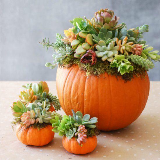 Pumpkins And Succulents Teresa Duffin