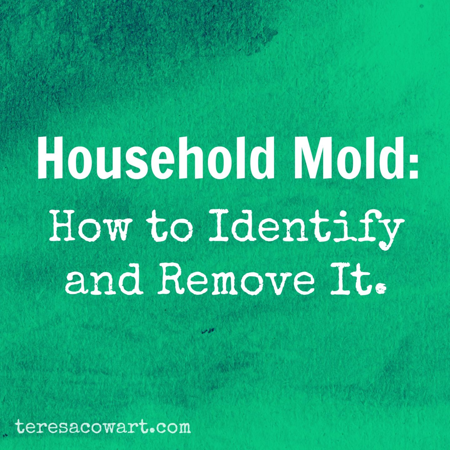 Mold in the Home: How to Identify and Remove It