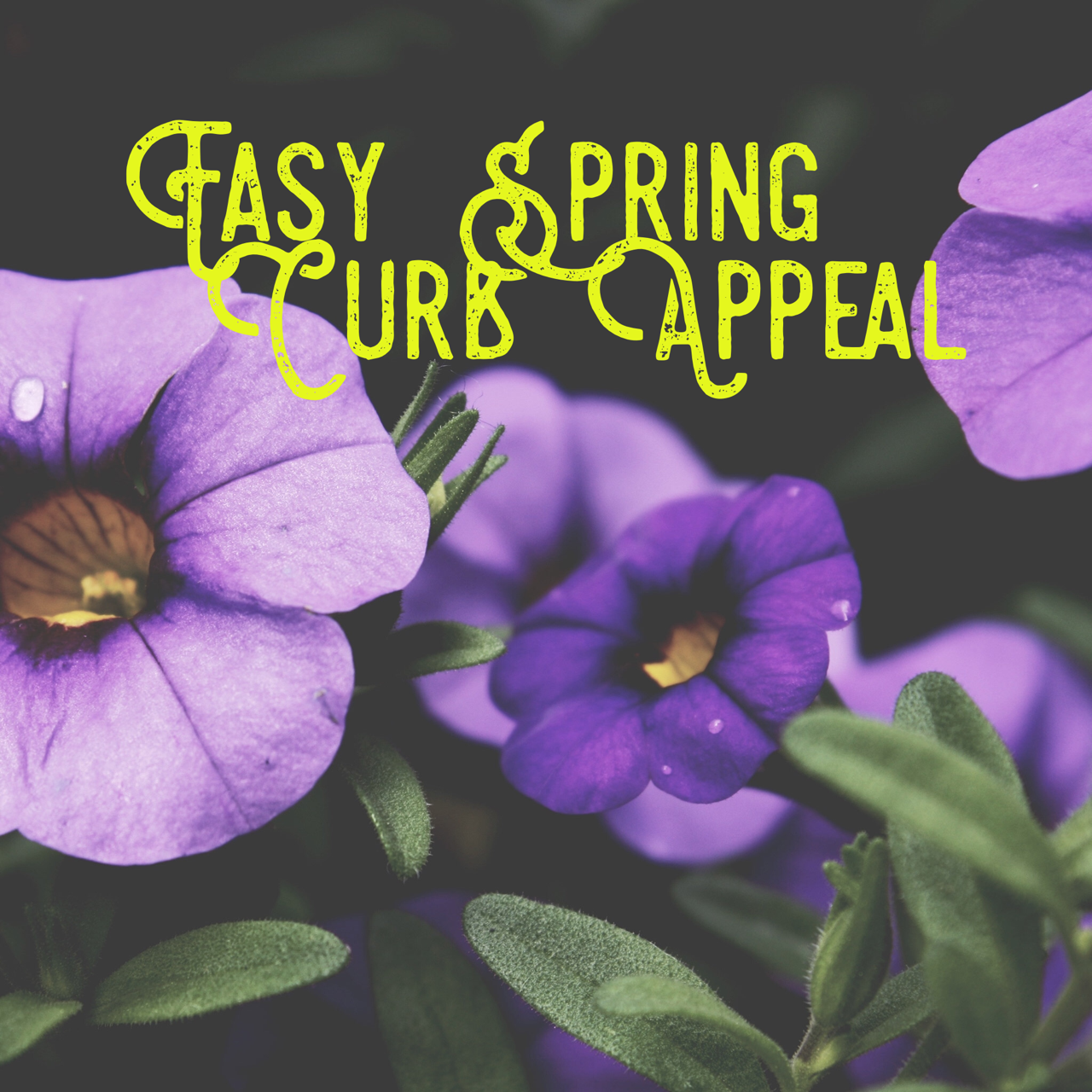 Easy Spring Curb Appeal